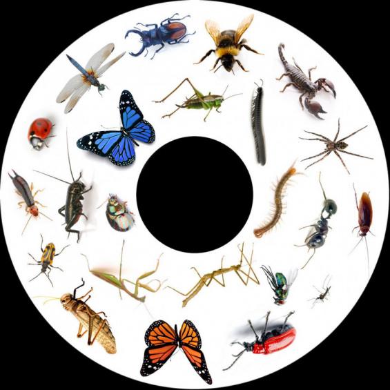 Obrazkovy kotuc hmyz