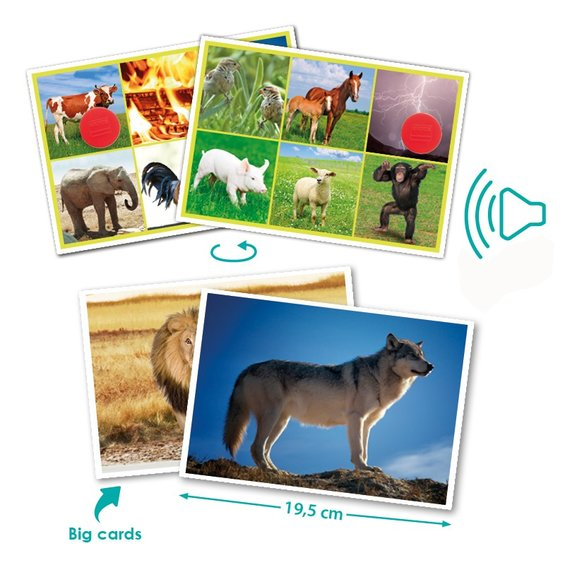 Sluchove bingo zvierata a priroda 1
