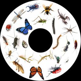 Obrázkový kotúč - Hmyz