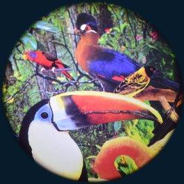 Obrázkový kotouč - Tropičtí ptáci